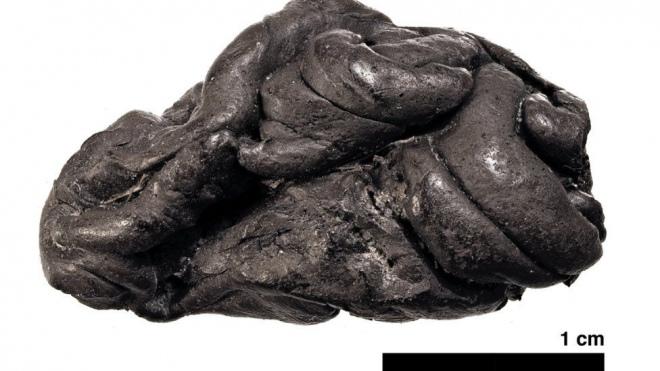 Шматок березової смоли віком 5,7 тисяч років